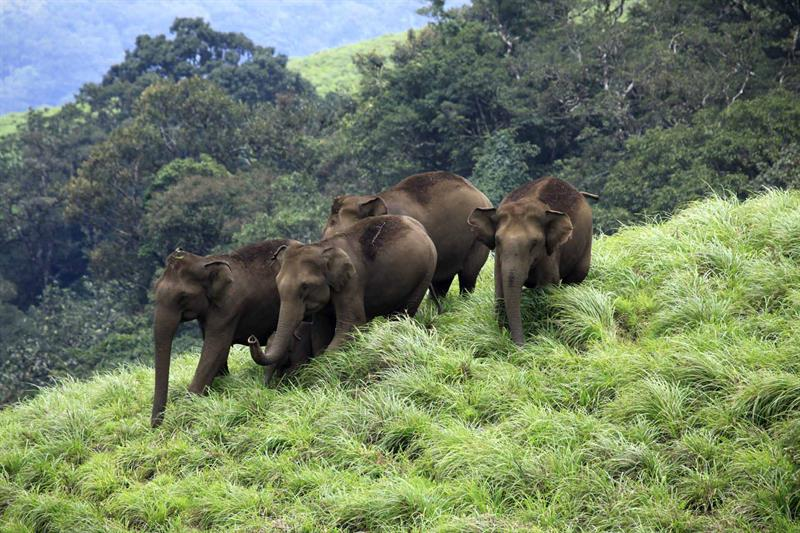 Aralam Wildlife Sanctury - Best Tourist Attractions in Kerala