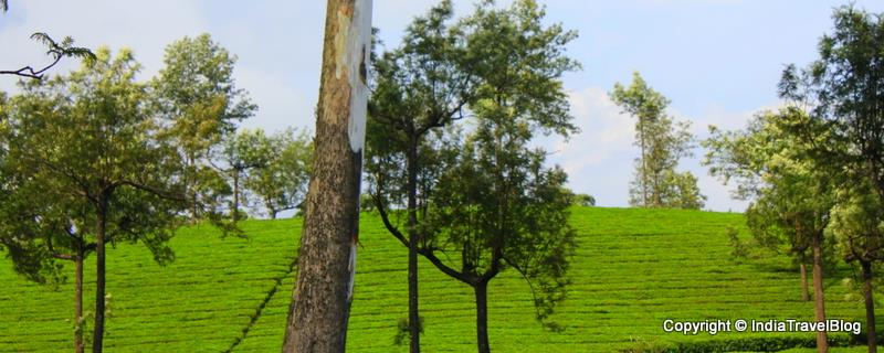 Natural beauty of Munnar