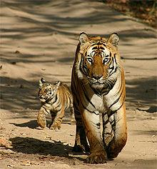 Bandhavgarh National Park Tiger Reserve Travel Guide