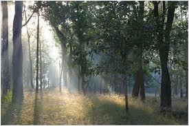 View of Pench National Park