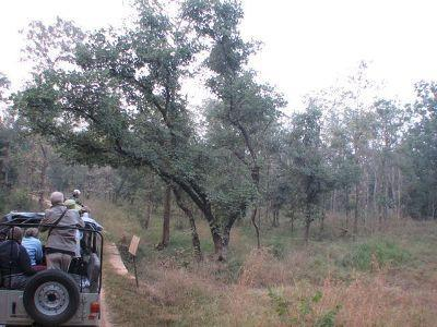 Panna Tiger Reserve Safari