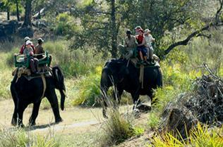 Elephant safari kanha national park