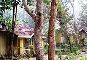 Wild Chalet resorts Kanha national park