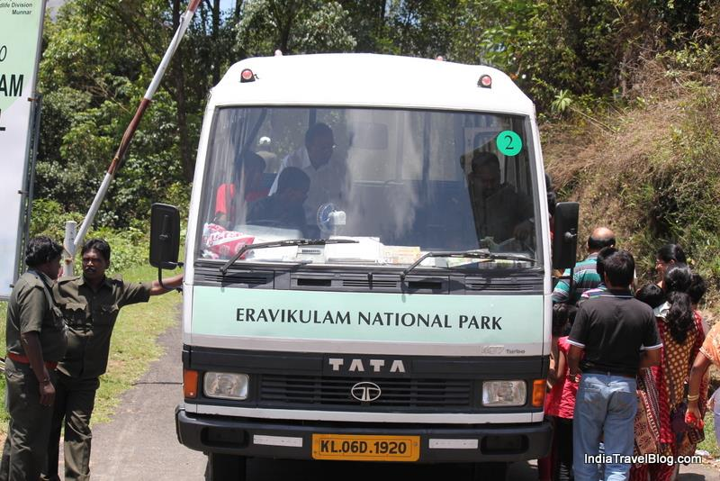 Wild Safari at Eravikulam National Park