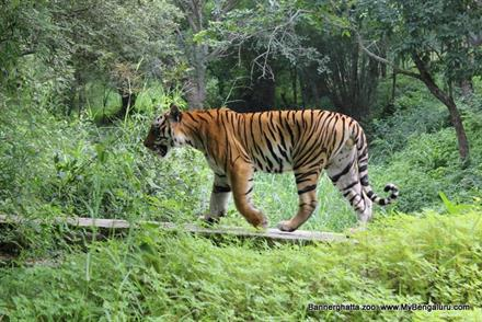 bannerghatta national park information