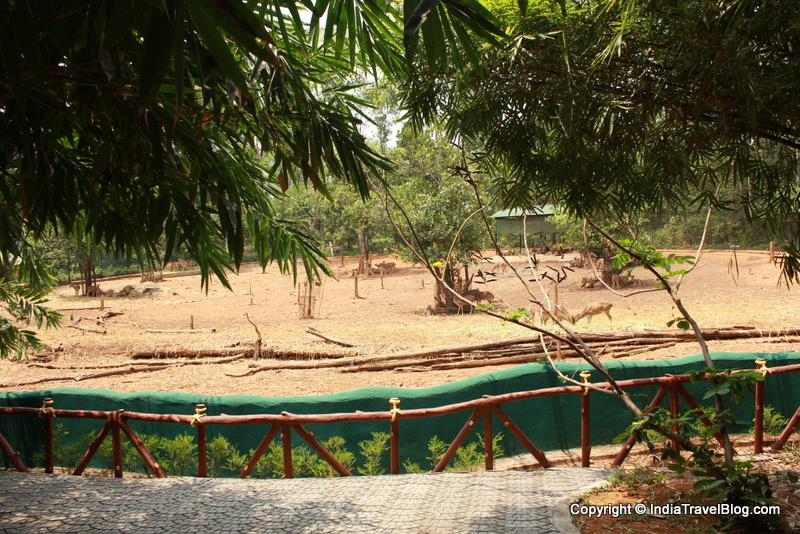 Spotted Deers at Abhayaranyam Zoo, Kaprikkad