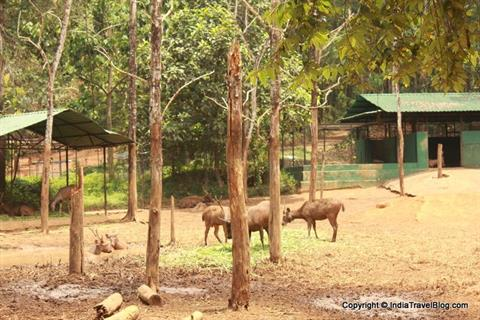 Animals at Abhayaranyam Zoo, Kaprikkad