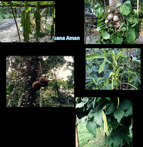 More organic farming