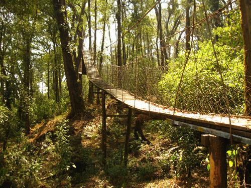 The Canopy Walk