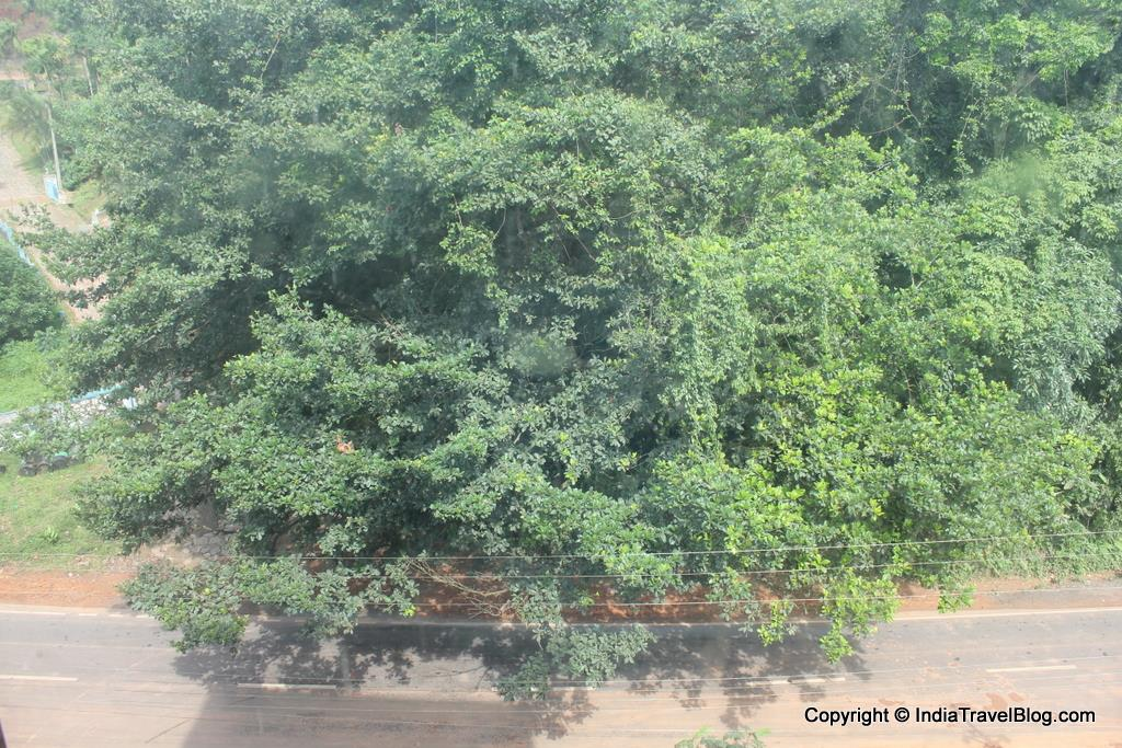 Pepper Wayanad Gate Hotel - View of Chain Tree
