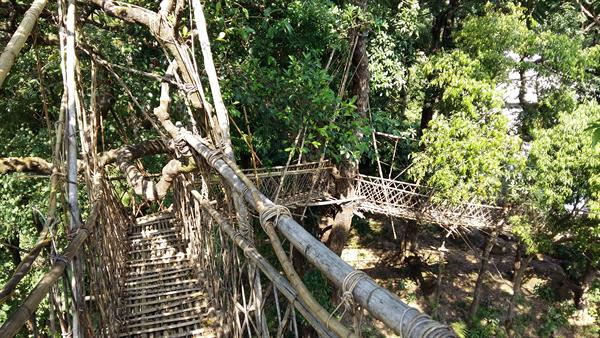 Bridge with natural, living tree roots