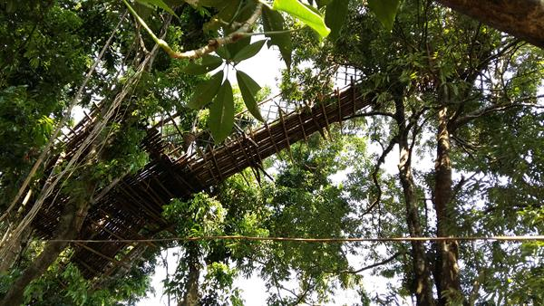 Walk on the root bridge in Shillong