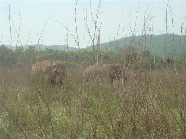 Elephant group inside corbett national park