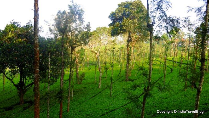 Beautiful view on the way to Ooty