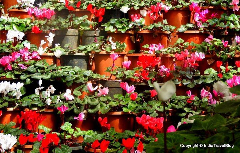 Flower garden in Ooty