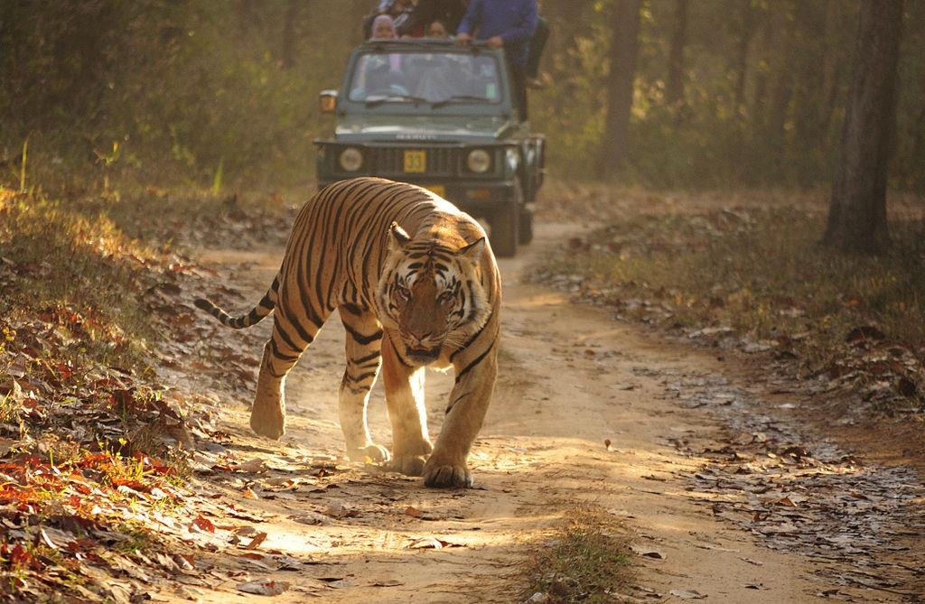 Kanha National Park, Best Tourist Places in Madhya Pradesh
