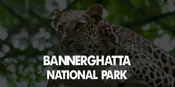 Bannerghatta national park safari timings