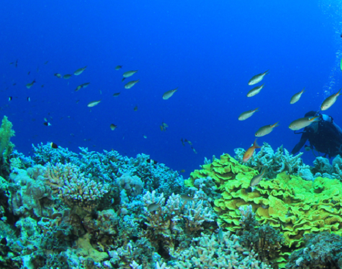 Indian Sea Diving Destinations to Explore Marine Life