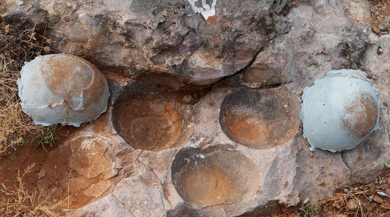 Indroda Dinosaur and Fossil Park Gujarat