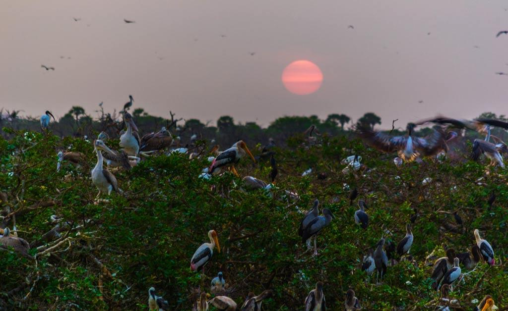 Sunrise-in-Vedanthangal