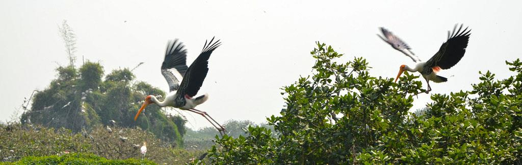 Vedanthangal_Bird_Sanctuary_seasons