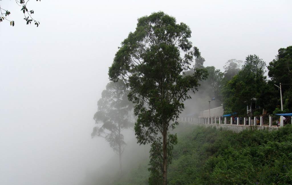Tree-in-Misty-Coaker-Walk