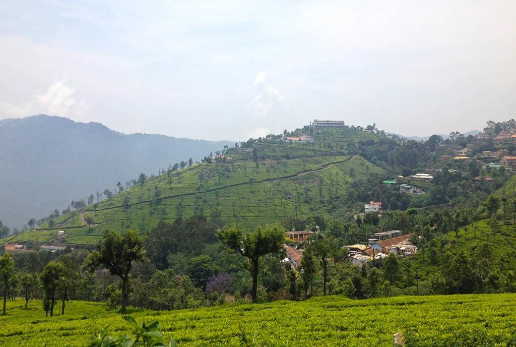 Ooty-tea-plantation
