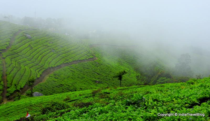 Munnar beautiful view near Plum Judy
