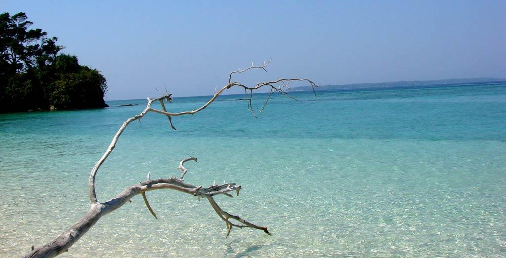 bare tree branches in Andaman Islands