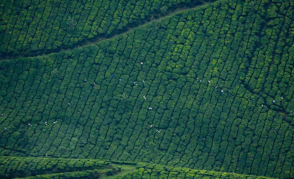 Sky-view-of-munnar-gardens