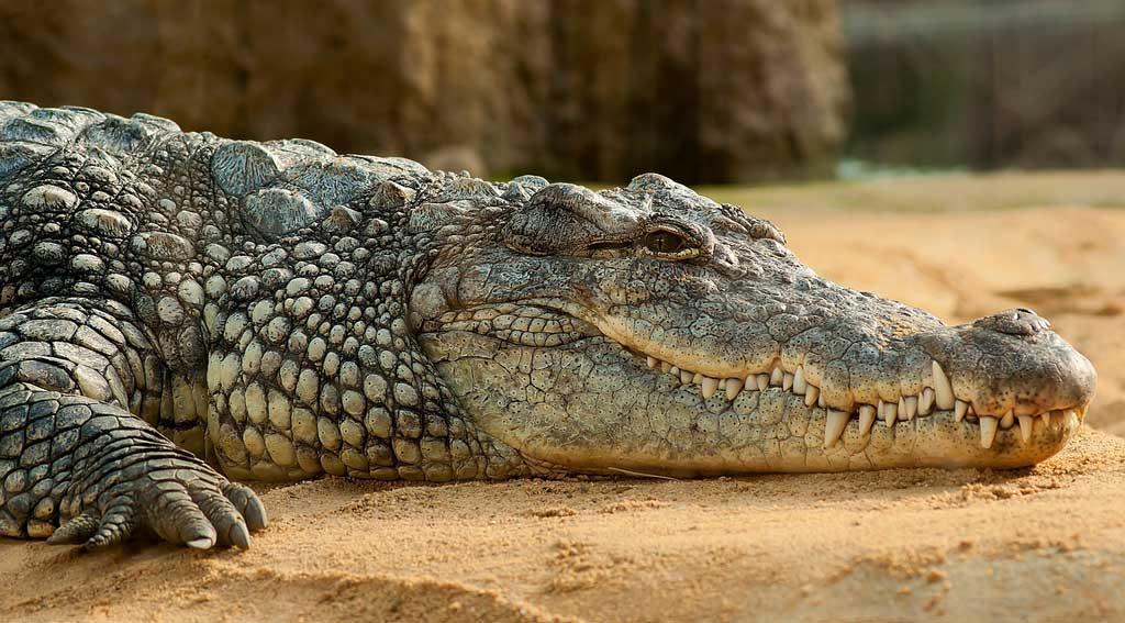 Trevors Crocodile Park mount abu