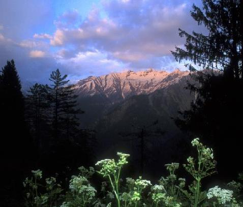 Himalayan Nature Park in Kufri