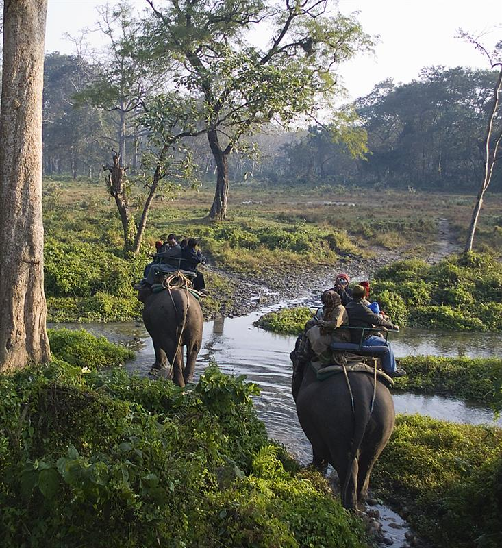 wilidlife tourism india travel blog