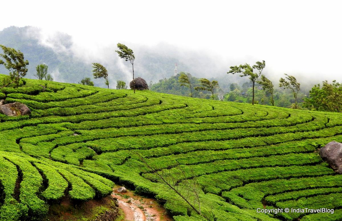 Comparison between Munnar and Wayanad