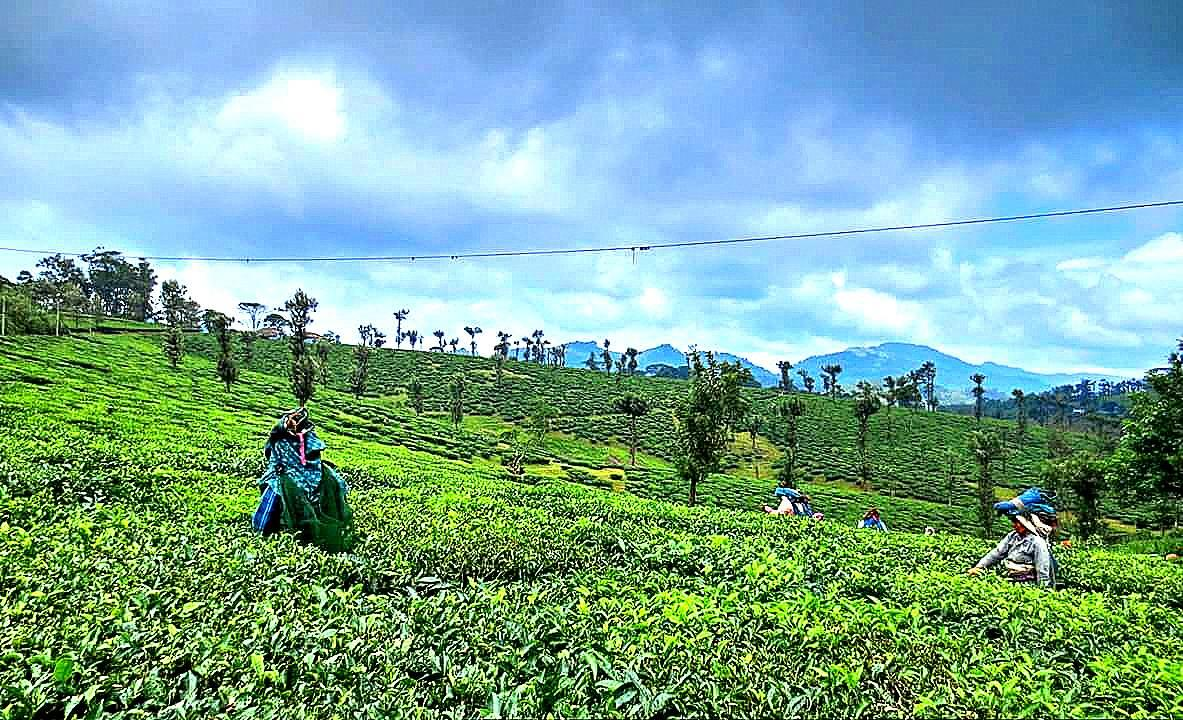 Nelliyampathy, Kerala, 10 Less popular Hillstation in India