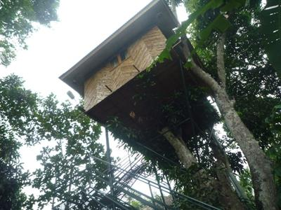 Hiliya Tree House