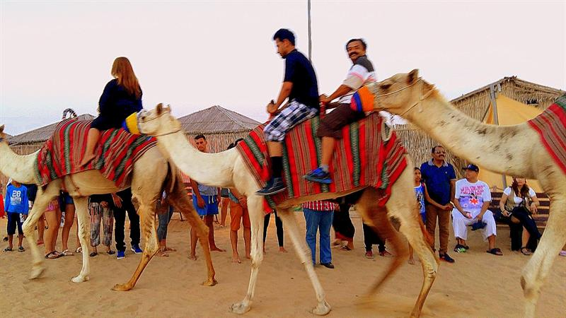Dubai Travel Diary - Camel Riding