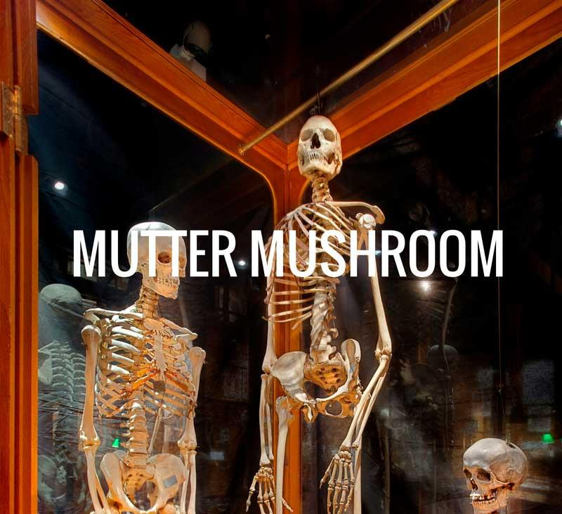 Mutter mushrooms