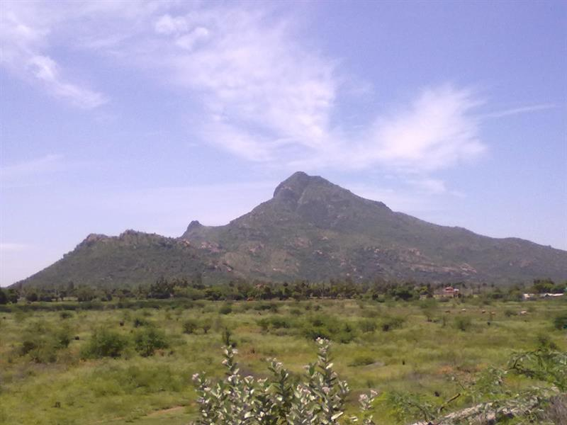 A_view_of_Thiruvanamalai_Mountain.