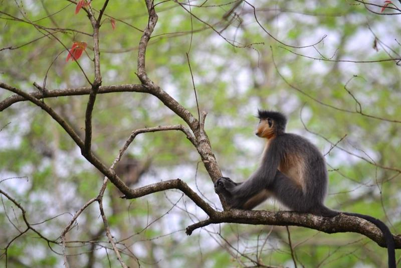 monkey-manas national park