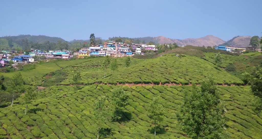 Tea Valley Munnar Kerala