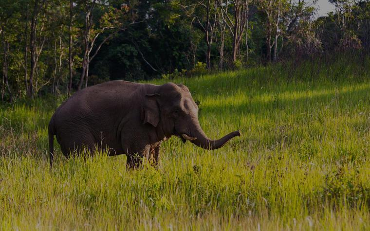 Pindrabera-Elephant-Dalma Wildlife Sanctuary