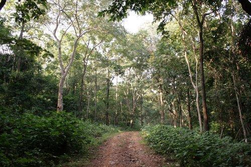 Pindrabera-Road-Places To Visit In Jamshedpur
