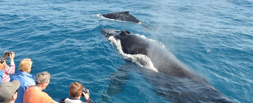 Whale Watching-Tourist Attractions in Byron Bay