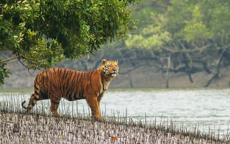 top 10 wildlife safari destination in india
