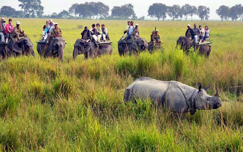 top 10 wildlife safaris in india
