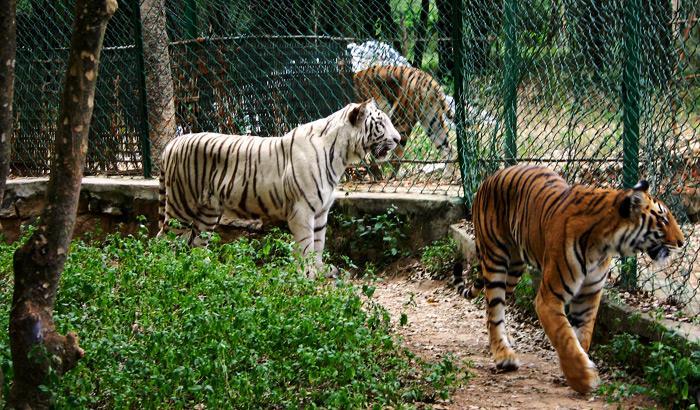 Bannerghatta-National-Park Alok Bhartia