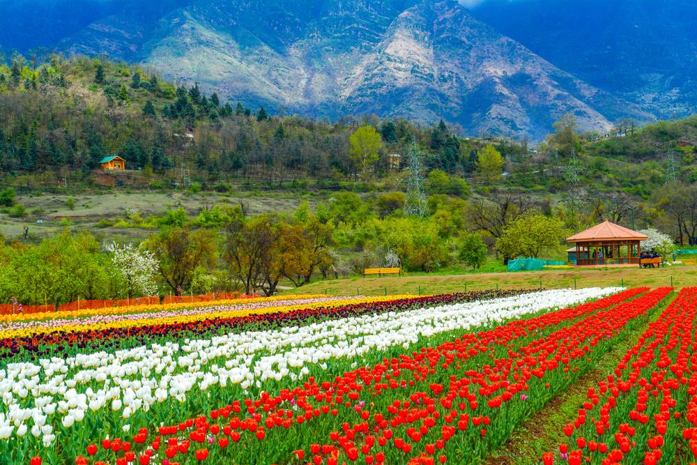 honeymoon package to srinagar
