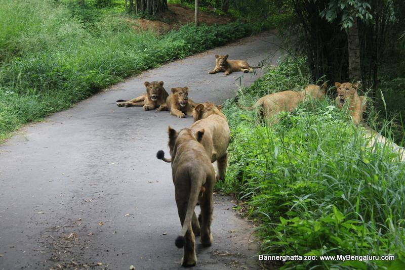 Bannerghatta National Park and Zoo
