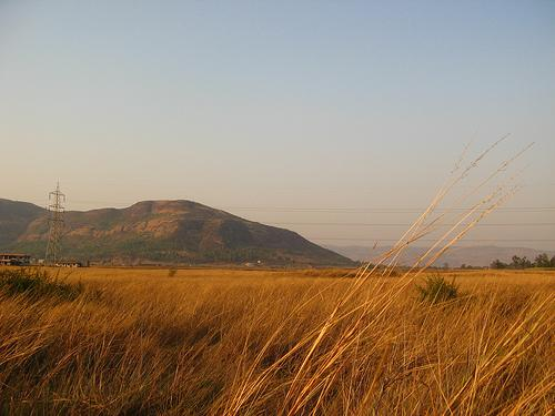 Dried Grass fields at Kamshet Near Pune